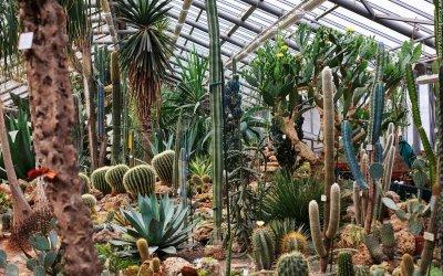 Ботанический сад, «По следам невиданных зверей» (тропики)